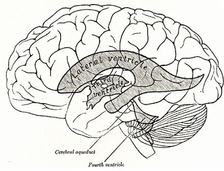 Ventrículos laterales