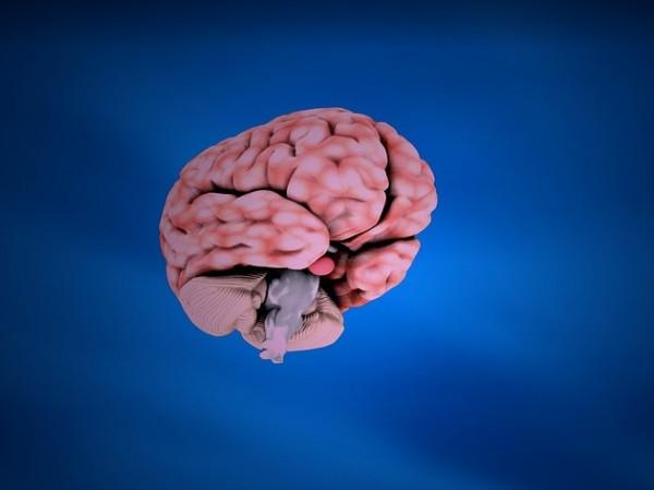 Imagen de un cerebro.