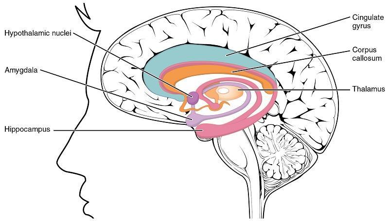 ¿Cómo afectan las emociones a nuestros recuerdos? La teoría de Gordon Bower