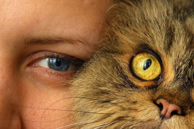 Los gatos dominan a sus dueños, según revela un estudio