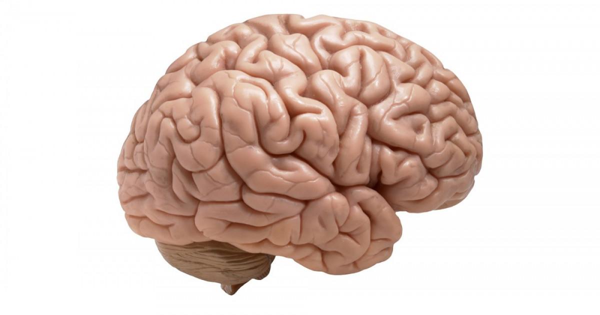 Corteza cerebral: sus capas, áreas y funciones
