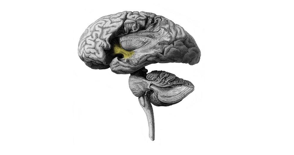 Psicopatía: ¿qué ocurre en la mente del psicópata?