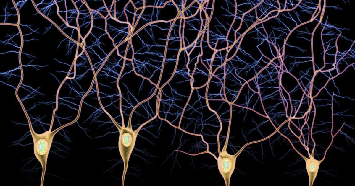 Vía aferente y vía eferente: los tipos de fibras nerviosas