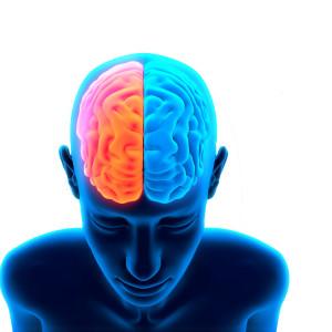 GABA (neurotransmisor): qué es y qué función desempeña en el cerebro