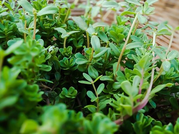 Las Mejores Efectos MedicinalesSus Contraindicaciones Plantas 50 Y E9DHI2