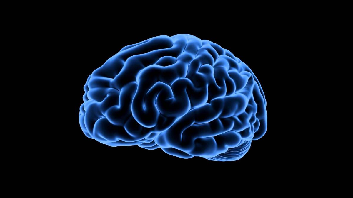 Glutamato (neurotransmisor): definición y funciones