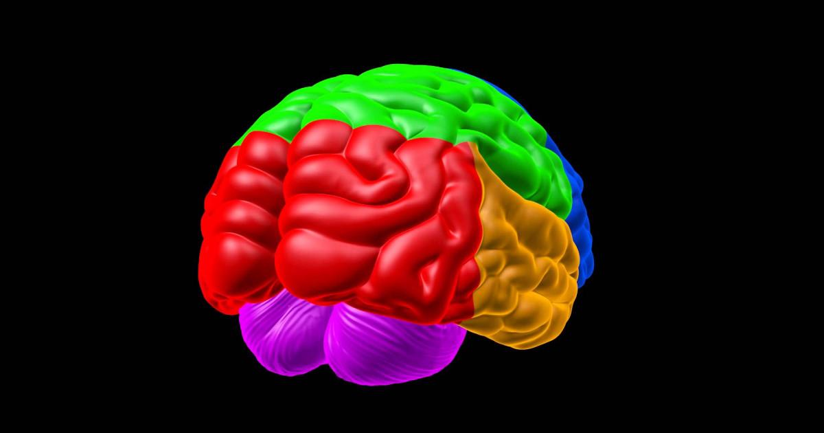 Psicología cognitiva: definición, teorías y autores principales