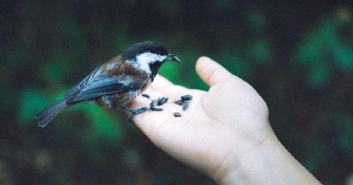 Las 84 Mejores Frases De Naturaleza Y Citas Célebres