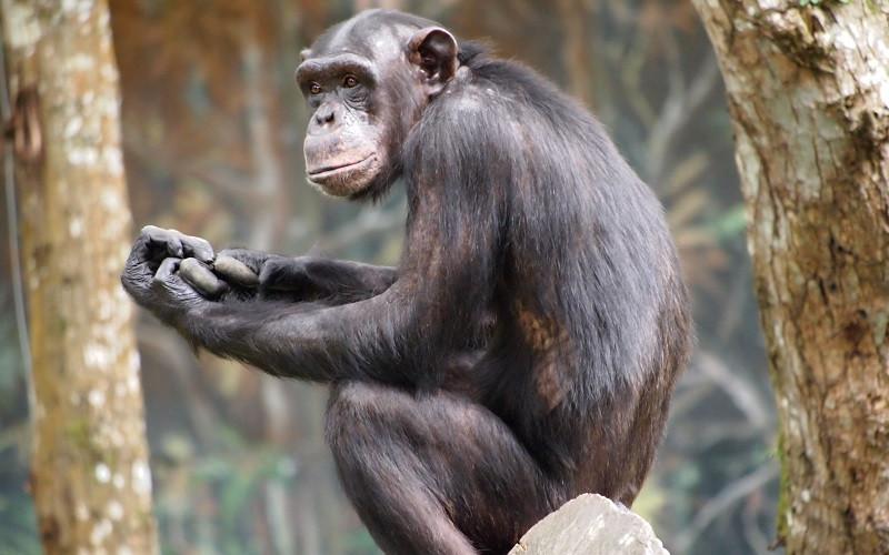 Inteligencia animal: las teorías de Thorndike y Köhler