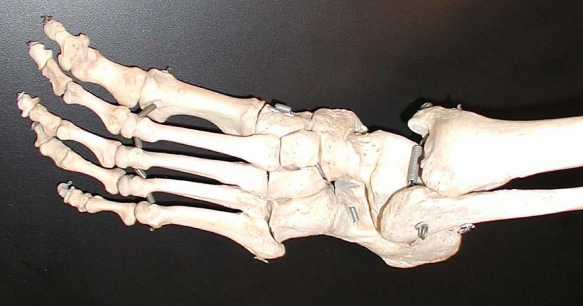 Cuántos Huesos Tiene El Pie Humano