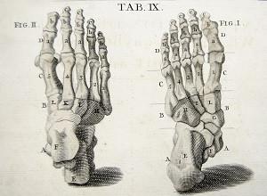 el cuerpo humano en los pies