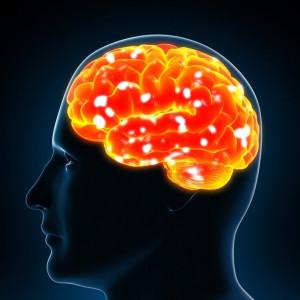 La personalidad podría estar regulada por el sistema inmune