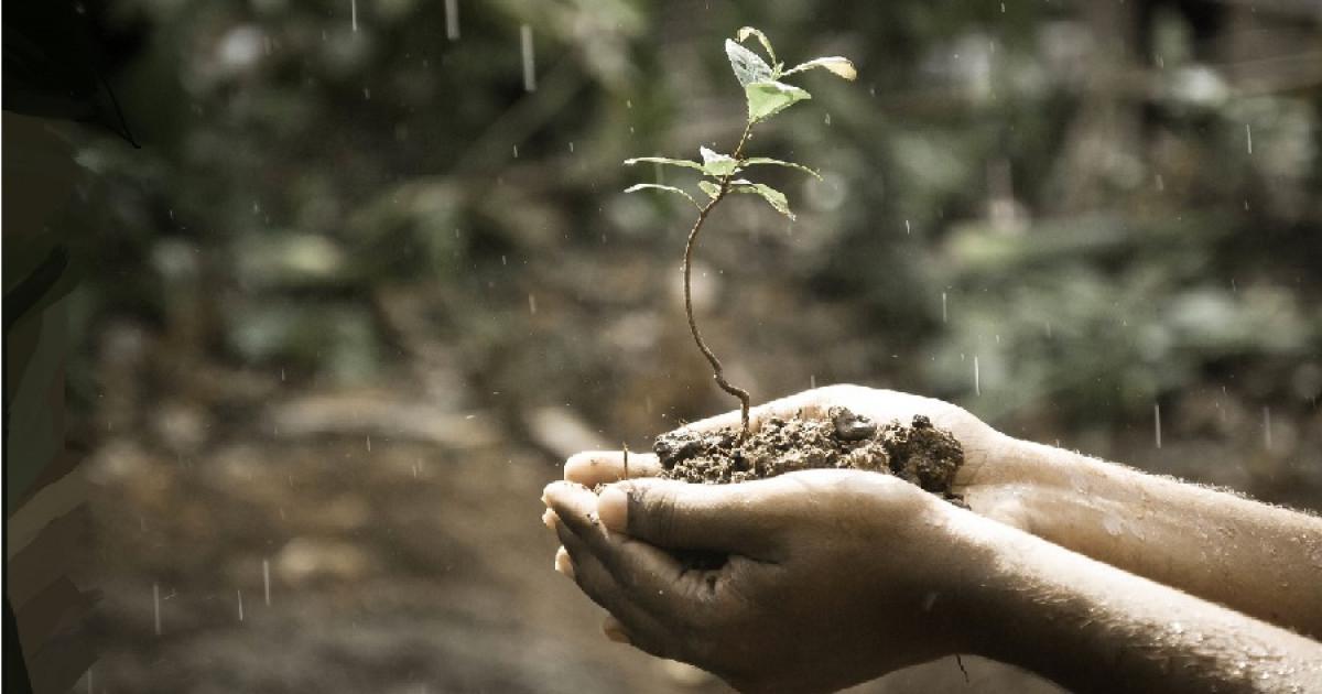 Inteligencia Naturalista Qué Es Y Para Qué Sirve