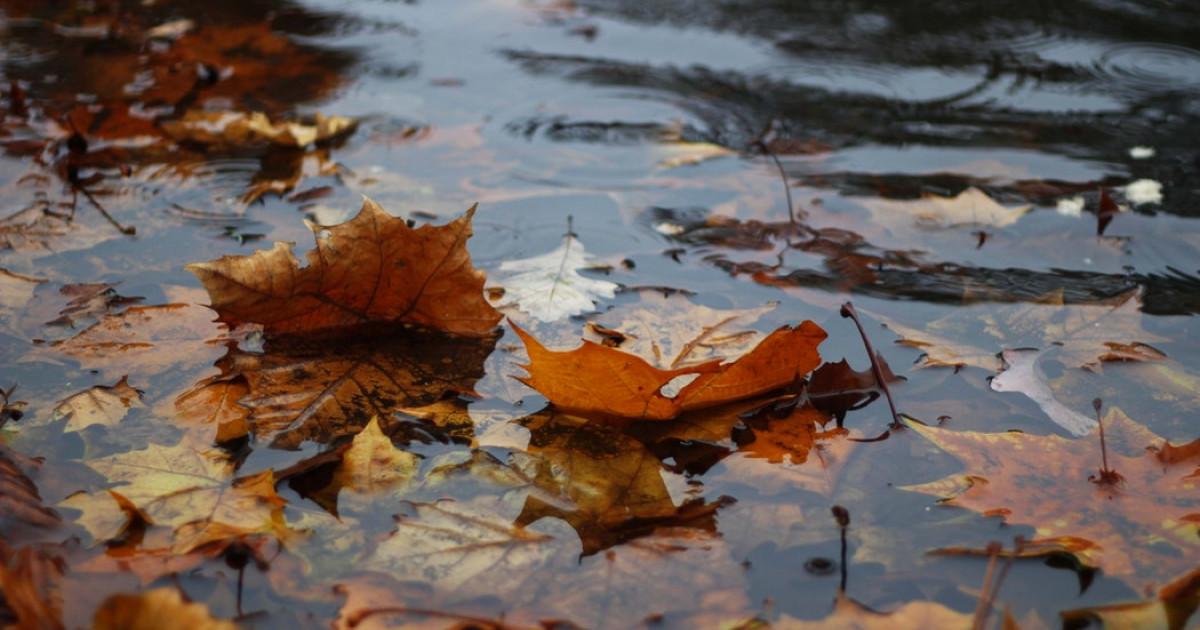 Las 70 Mejores Frases Sobre La Lluvia
