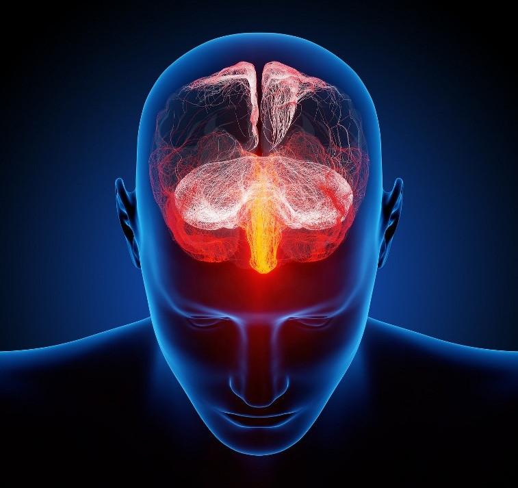 ¿Qué hace tan especial al cerebro humano?