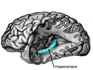Qué es el hipocampo?