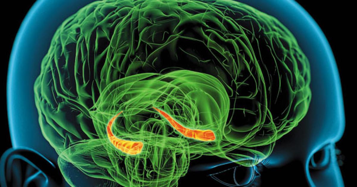 Hipocampo: Funciones, Anatomía y Patologías (con Imágenes) - Lifeder