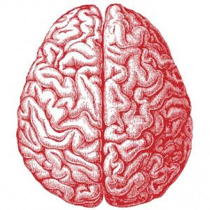 """Las diferencias cerebrales entre estudiantes """"de letras"""" y estudiantes """"de ciencias"""""""