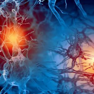 Tipos de hormonas y sus funciones en el cuerpo humano