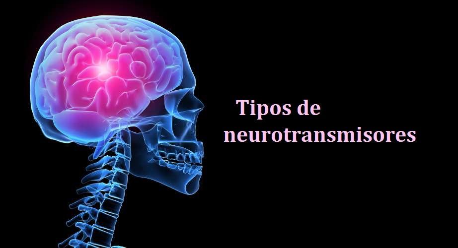 Tipos de neurotransmisores: funciones y clasificación