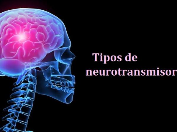 Tipos De Neurotransmisores Funciones Y Clasificación
