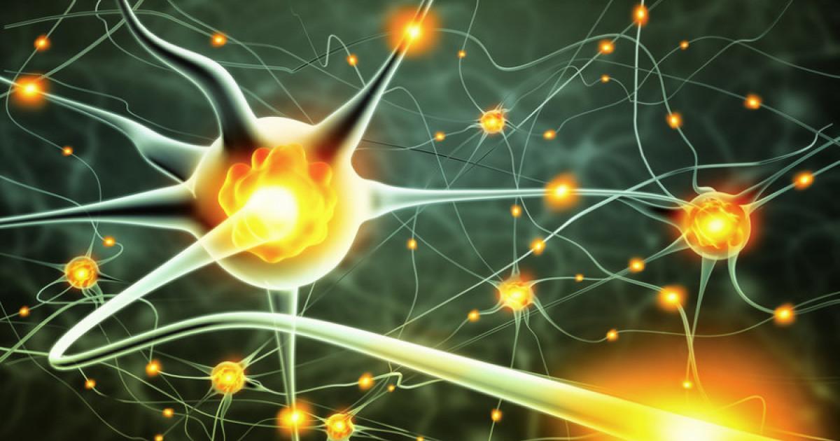 Cuántas neuronas tiene el cerebro humano?