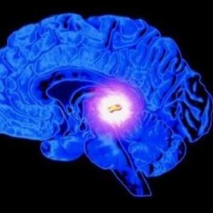 Glándula pituitaria (hipófisis): el nexo entre neuronas y hormonas