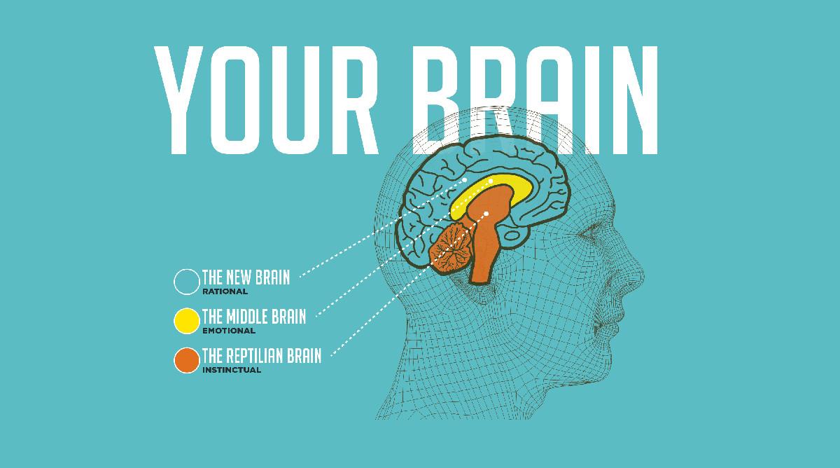 El modelo de los 3 cerebros: reptiliano, límbico y neocórtex