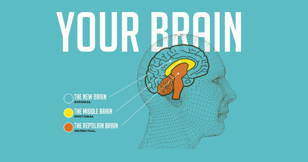 Modelo de los 3 cerebros: reptiliano, límbico y neocórtex