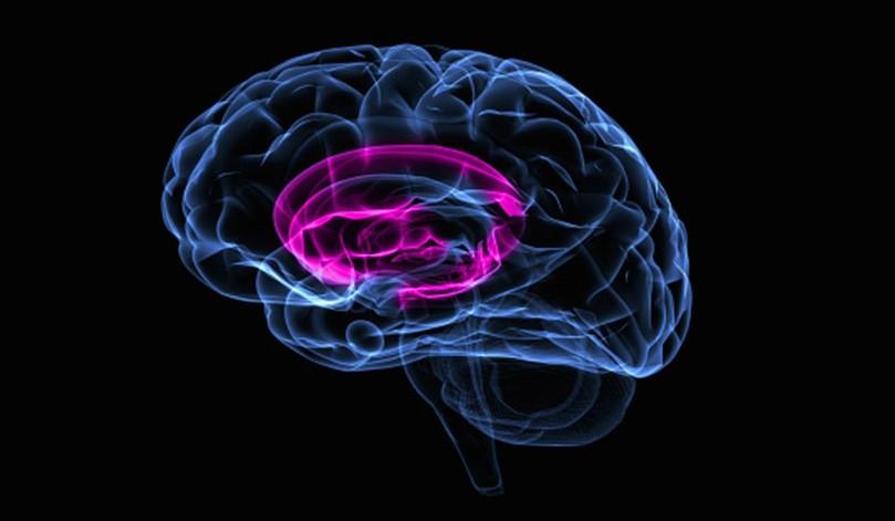Ganglios basales: anatomía y funciones