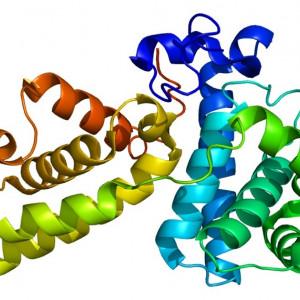 Los 20 tipos de proteínas y sus funciones en el organismo