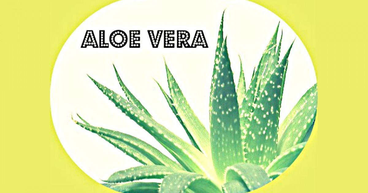 Aloe vera hidrata o reseca