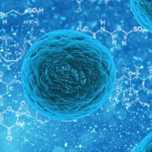 Tipos de células principales del cuerpo humano