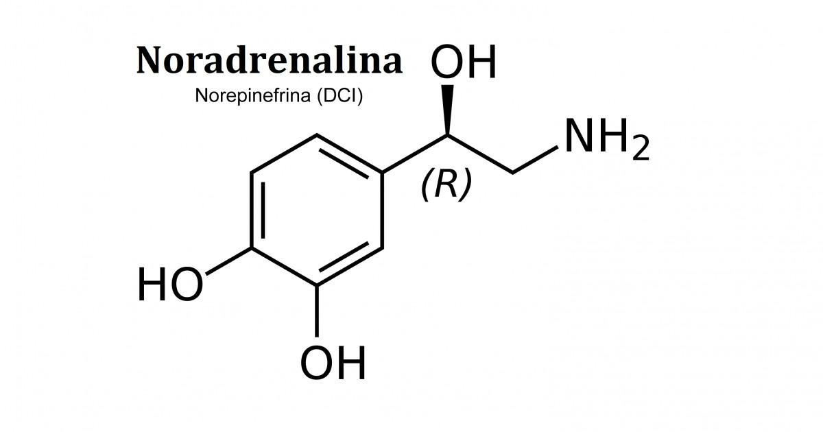 Resultado de imagen para noradrenalina