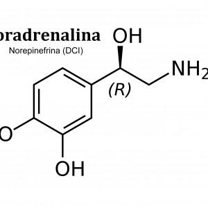 Noradrenalina (neurotransmisor): definición y funciones