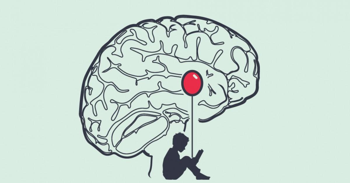 Amígdala Cerebral Estructura Y Funciones