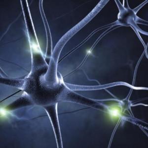 Endorfinas (neurotransmisores): funciones y características