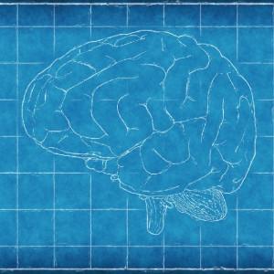 ¿Qué es la curva del olvido?