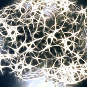 ¿Qué son los axones de las neuronas?