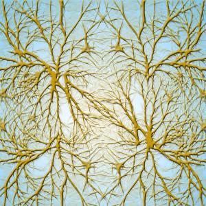 ¿Qué son las dendritas de las neuronas?