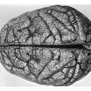 10 cursos de Neurociencias gratis y online