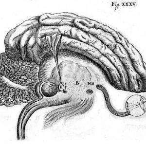¿Qué es la Psicología Fisiológica?