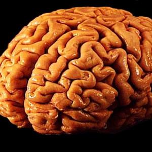 La psicoterapia produce cambios en el cerebro