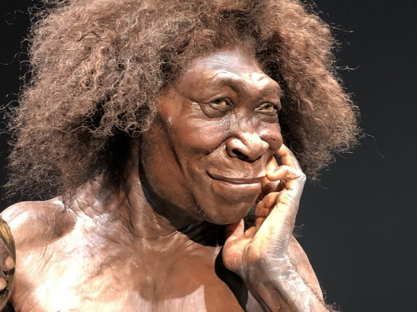 homo-erectus-thumb.jpg