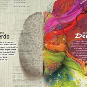 Hemisferios cerebrales: mitos y realidades