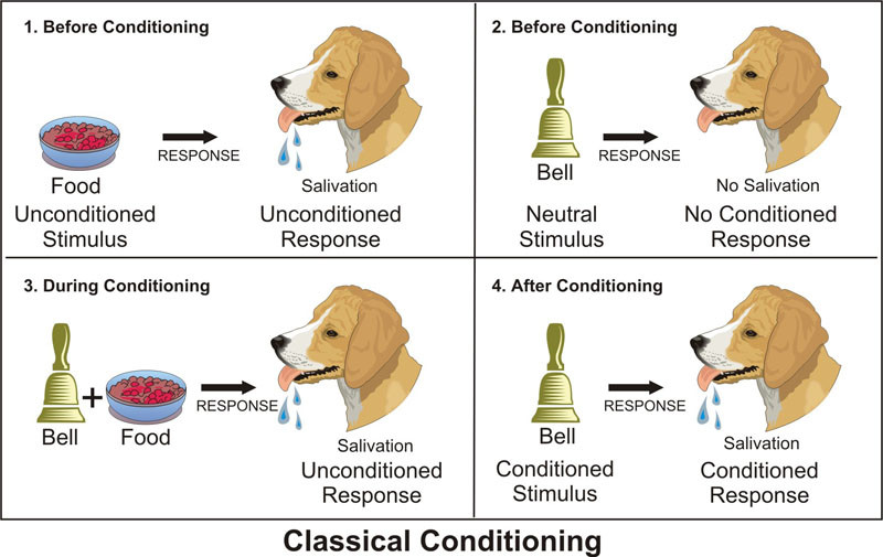 using operant and classical conditioning to teach tricks to a dog Unlike classical conditioning let's say i want my wife to lose weight and i am going to use operant conditioning let's say you want to teach your dog.