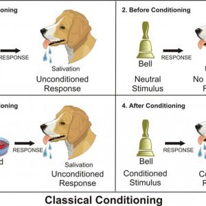 El condicionamiento clásico y sus experimentos más importantes