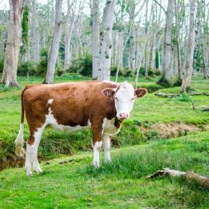 Las 90 mejores frases sobre veganismo