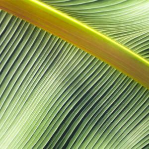 Las 18 mejores plantas de interior según la Psicología Ambiental
