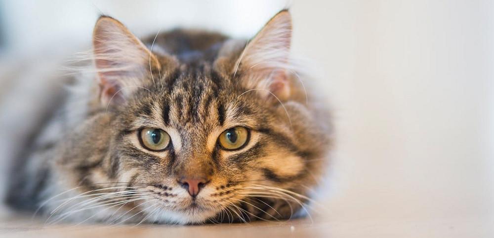 Así es la visión (nocturna y diurna) de los gatos